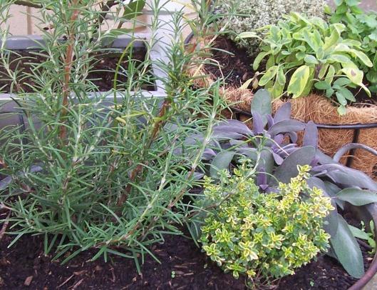herb-pots-close
