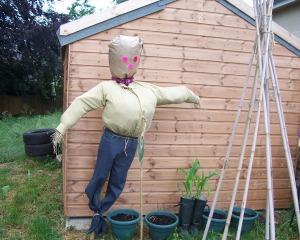 ccallotment_scarecrow 002