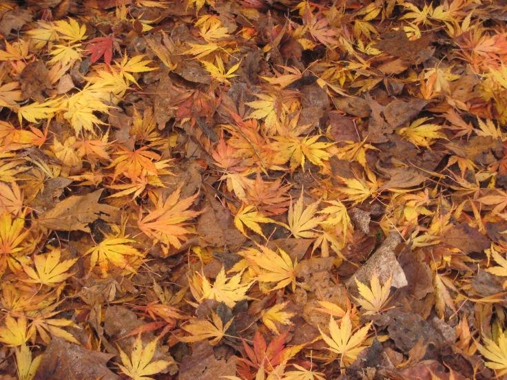 Autumn colour_5