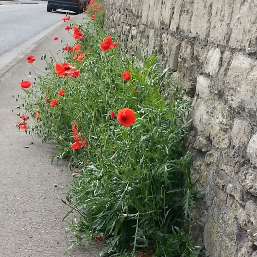 Poppy pavement