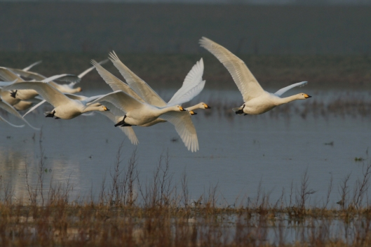 picture by Neil Smith on  RSPB website
