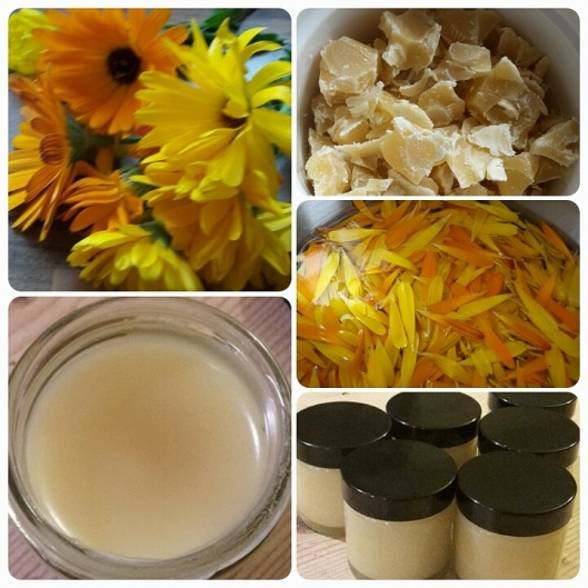 Calendula salve, an easy make for children