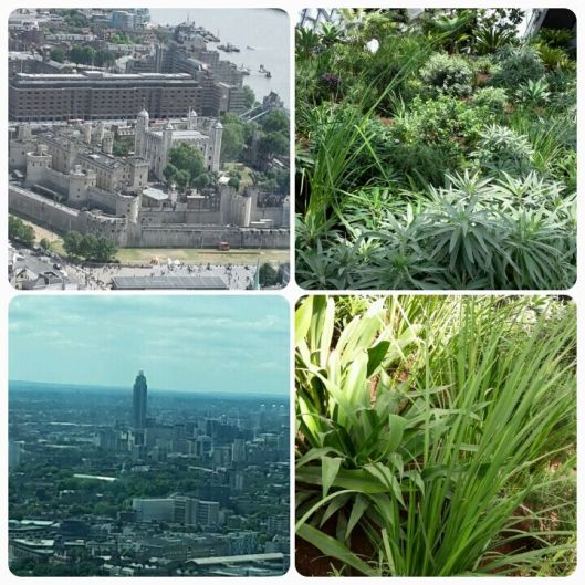 Views in and from the Sky Garden, London
