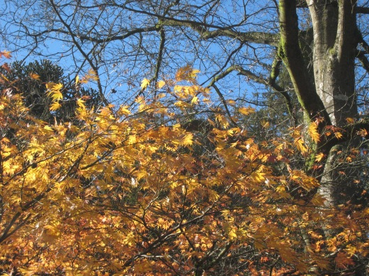 Autumn colour_3