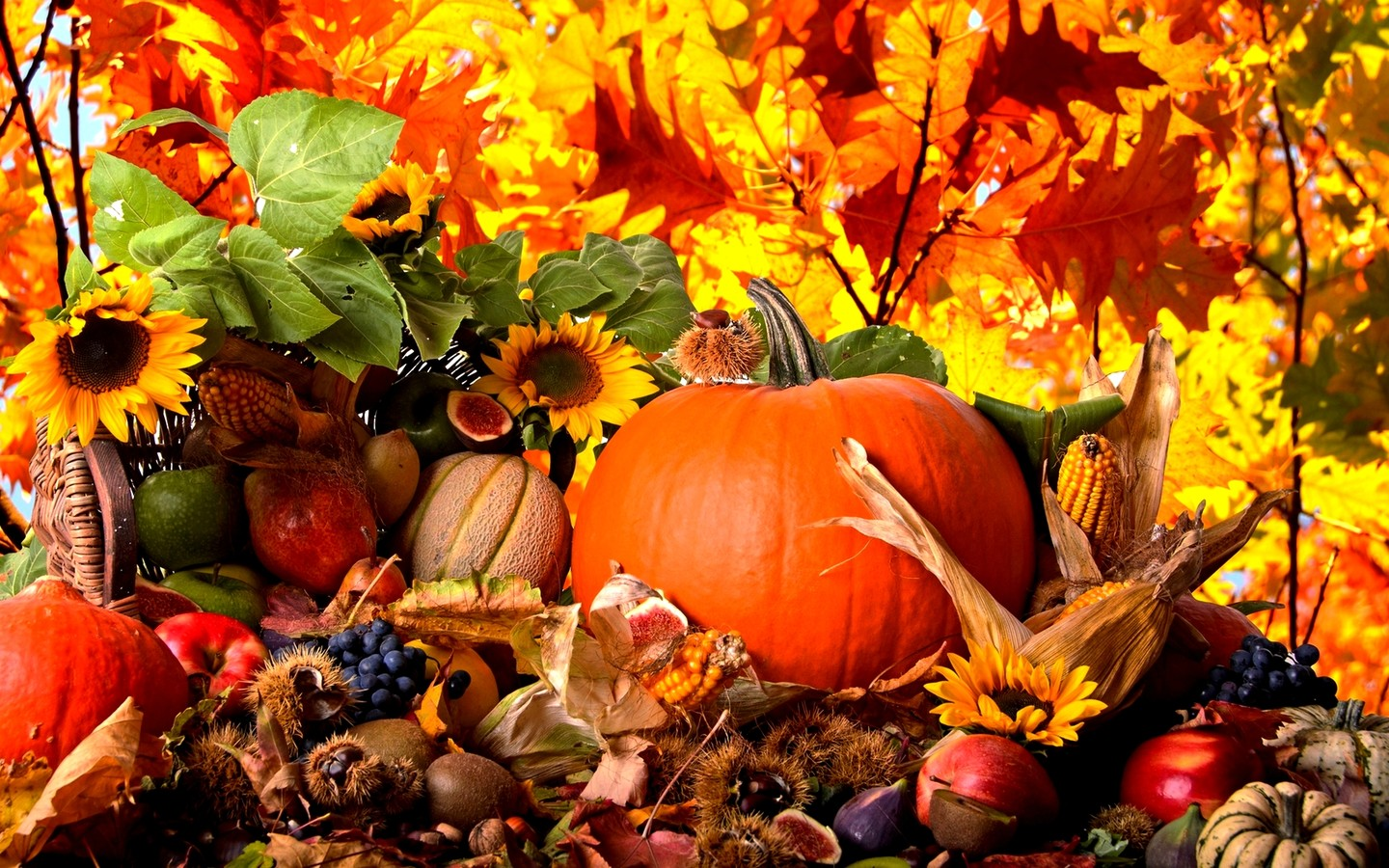 Fruits-and-vegetables-from-Autumn-season-HD-wallpaper_1440x900